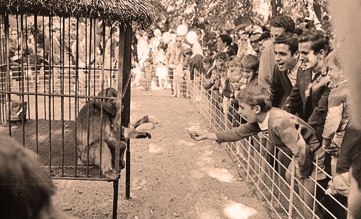 Monos en las jaulas del zoológico de Sevilla, en 1967 / Fototeca Municipal de Sevilla