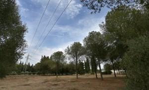 Espacio libre tras la tala del Parque Infanta Elena / V.G.