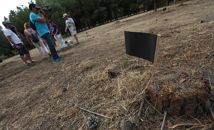 Tocón sin arrancar tras la tala del Parque Infanta Elena / Vanessa Gómez