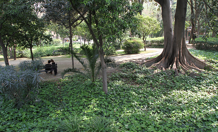 El vergel del Parque de María Luisa, con amplias zonas de sombra y frondosidad / Rocío Ruz