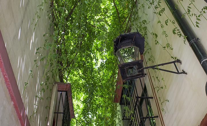El manto verde que tamiza la calle del mismo nombre y que aporta gran frescor a quien la transita / Fran Piñero