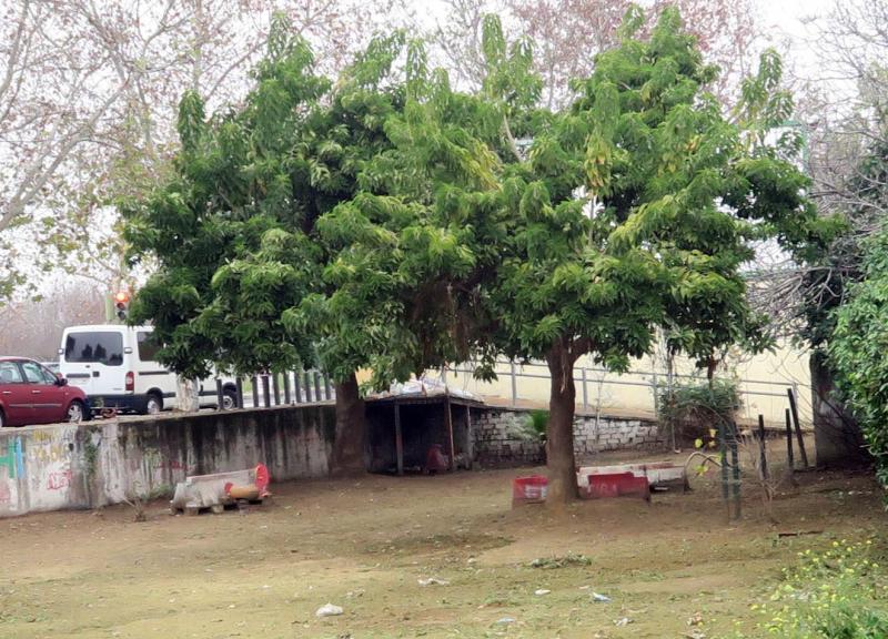 En el único espacio de recreo había un parque infantil y porterías que han sido desmantelados—R.D.